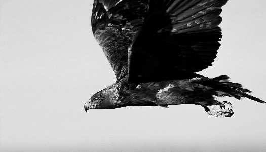 wing_b