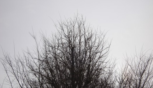 winter_tree