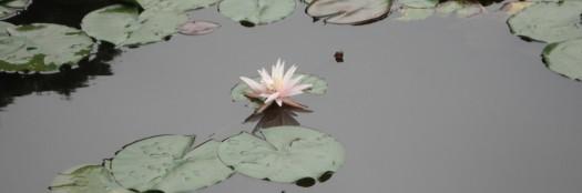Lotus2009