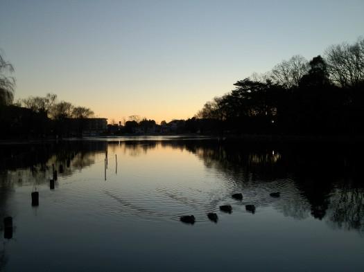 early_spring_in_shakujii_kohen